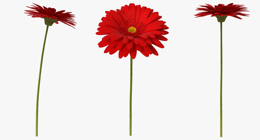 Red Gerbera Flower royalty-free 3d model - Preview no. 4