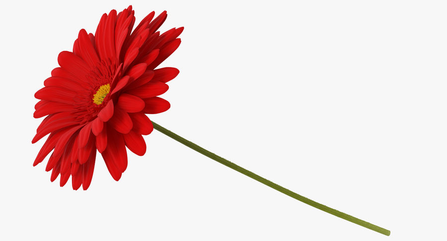 Red Gerbera Flower royalty-free 3d model - Preview no. 3