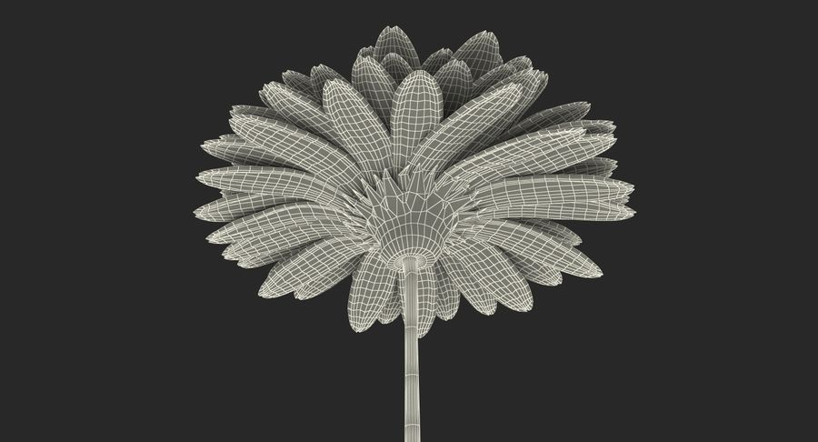 Red Gerbera Flower royalty-free 3d model - Preview no. 16