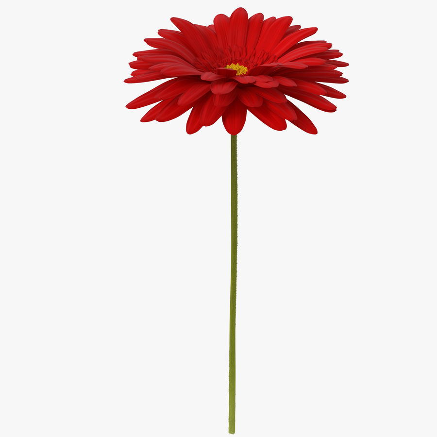 Red Gerbera Flower royalty-free 3d model - Preview no. 1