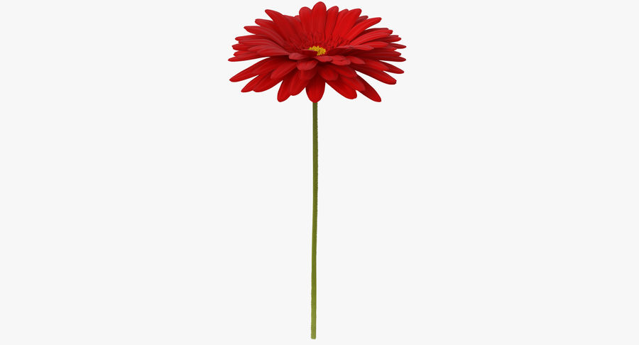 Red Gerbera Flower royalty-free 3d model - Preview no. 2
