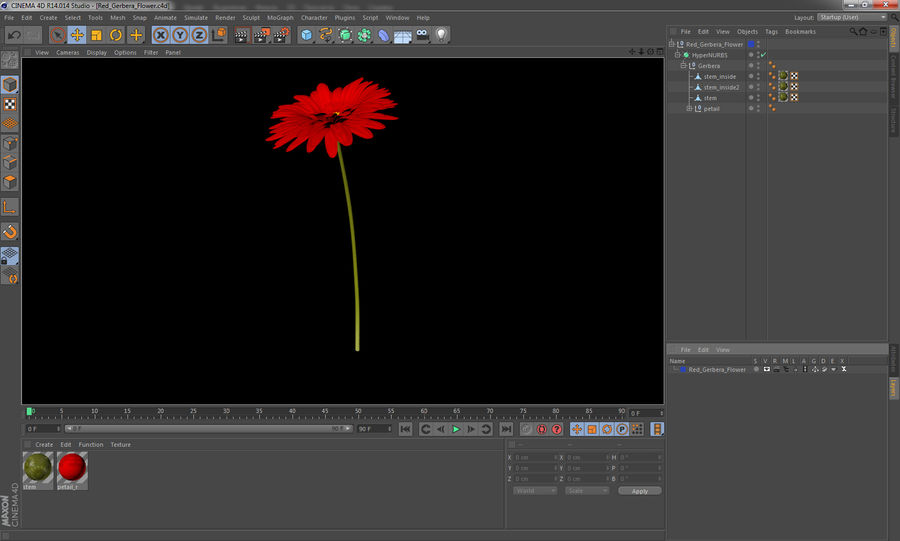 Red Gerbera Flower royalty-free 3d model - Preview no. 12