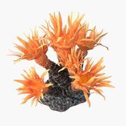 sun coral_v2 3d model