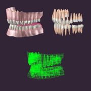 Teeth_ah.max.zip 3d model