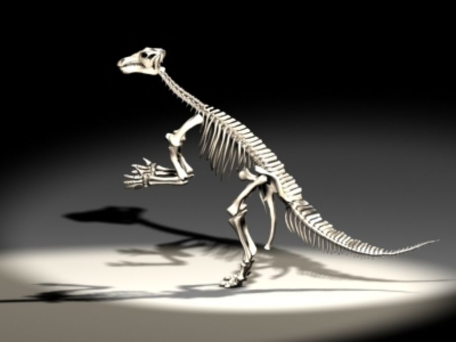 dinoskeleton royalty-free 3d model - Preview no. 2