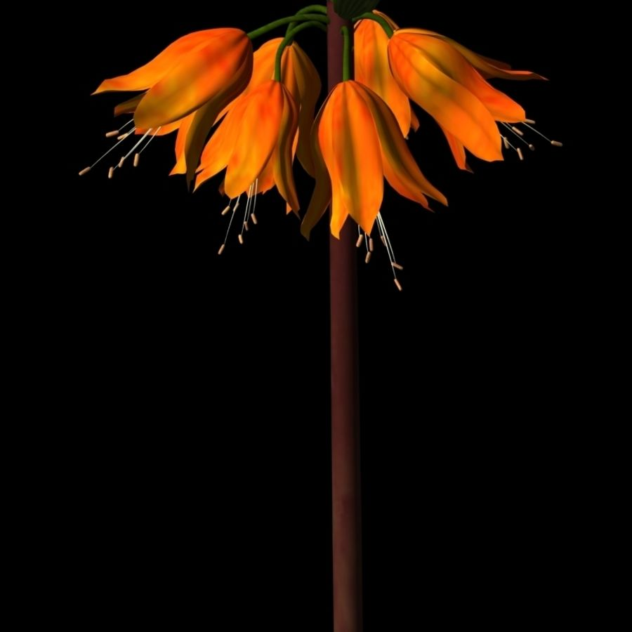 Crown Imperial Fritillaria.max.zip royalty-free 3d model - Preview no. 1