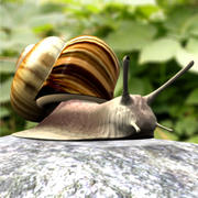 PF_Snail_dxf 3d model