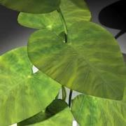 plant01_c4D.zip 3d model