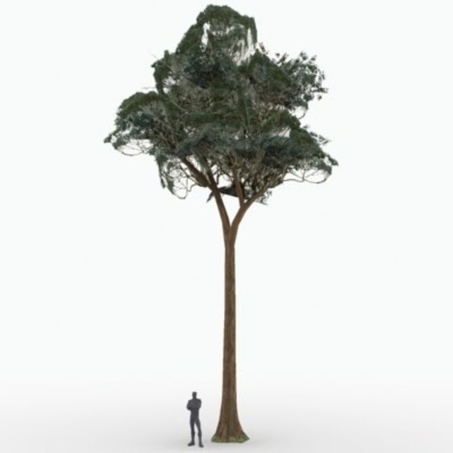 Drzewo royalty-free 3d model - Preview no. 1