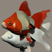 Ryukin (pesce rosso) 3d model