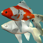 Shubunkin (poisson rouge) 3d model