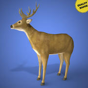 Real Time Deer 3d Model 3d model