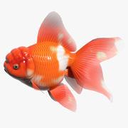 Japon Orandası 3d model