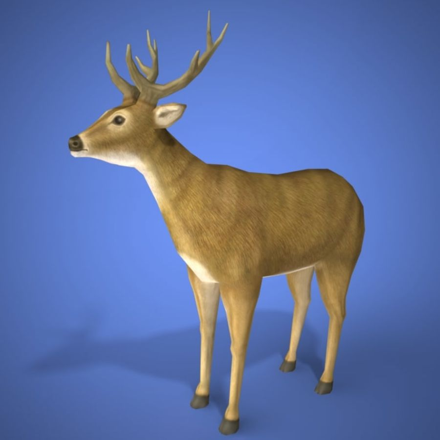 Colección de animales en tiempo real royalty-free modelo 3d - Preview no. 2
