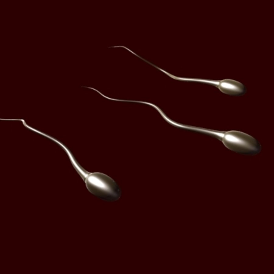Sperm Cells royalty-free 3d model - Preview no. 2