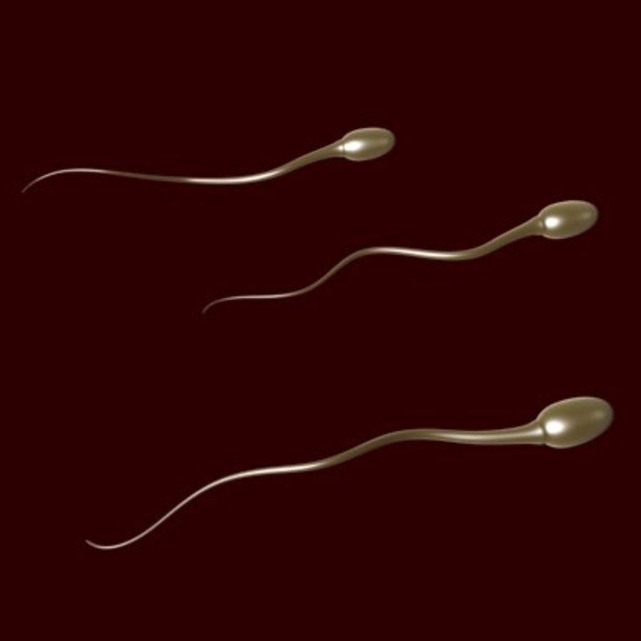 Sperm Cells royalty-free 3d model - Preview no. 1