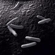 バクテリア 3d model