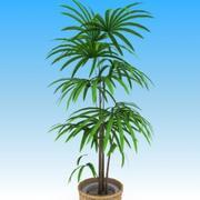 Plants_syurochiku 3d model