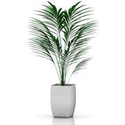 palm_MAX.zip 3d model