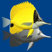 긴 beaked butterflyfish 3d model
