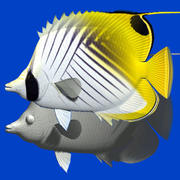 Threadfin butterflyfish 3d model