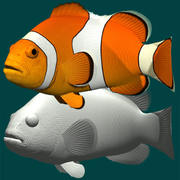 Pagliaccio anemonefish 3d model
