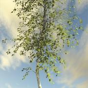 Geniş Yapraklı Ağaç 1 3d model