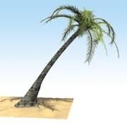 3D Palm Tree Model 3d model