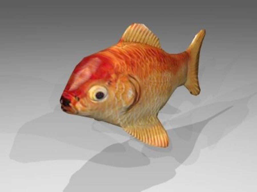 Goldfisch royalty-free 3d model - Preview no. 2