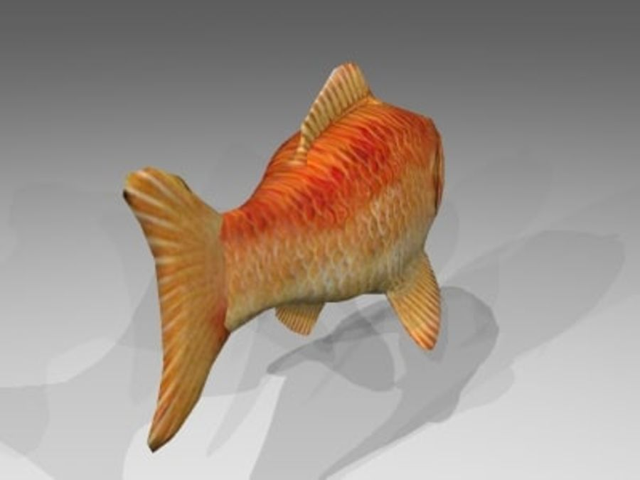 Goldfisch royalty-free 3d model - Preview no. 3