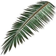 Palm Branch 3d model