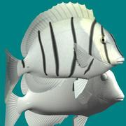 Skazać surgeonfish 3d model