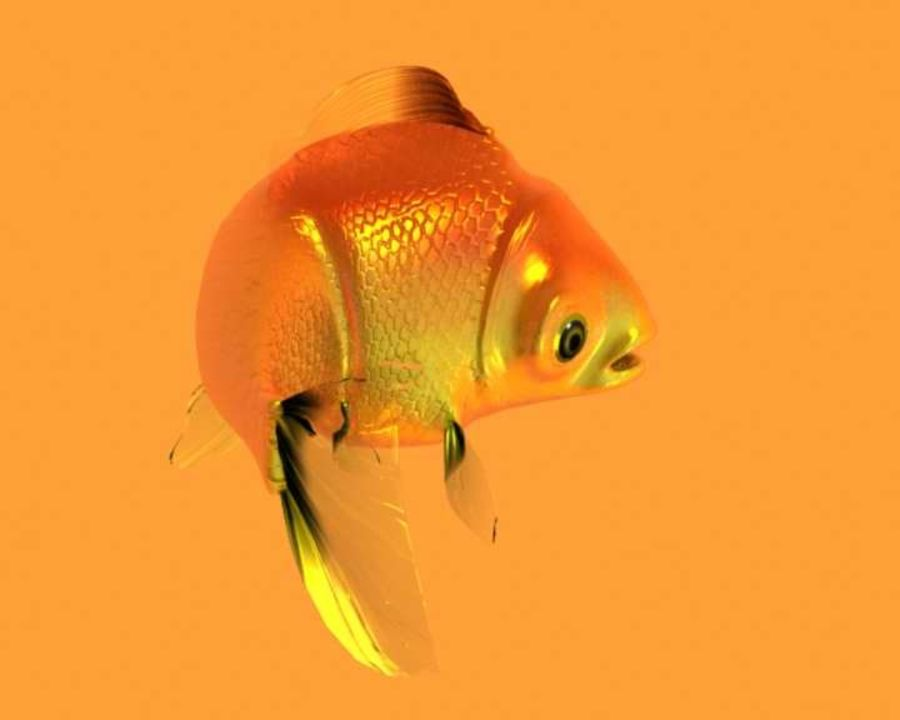 Gold Fish royalty-free 3d model - Preview no. 9