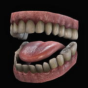 teeth.zip 3d model