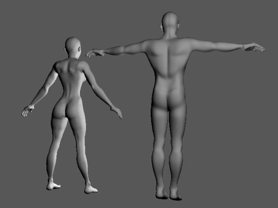 Bodies: Male and Female royalty-free 3d model - Preview no. 3