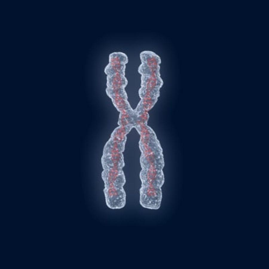 染色体 royalty-free 3d model - Preview no. 2