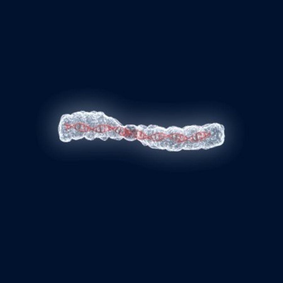染色体 royalty-free 3d model - Preview no. 3