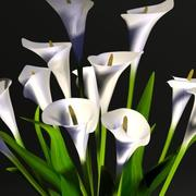 Lilyum vazo 3d model