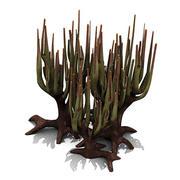 Roślina: Calvaria 3d model
