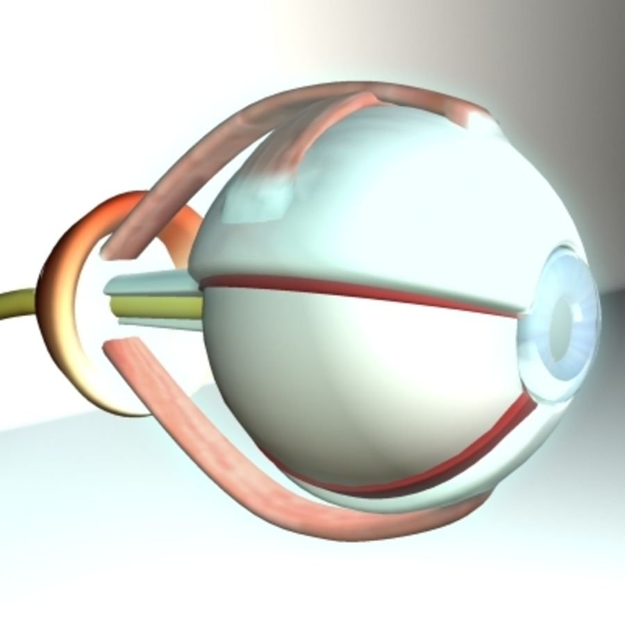 eye.zip royalty-free 3d model - Preview no. 2