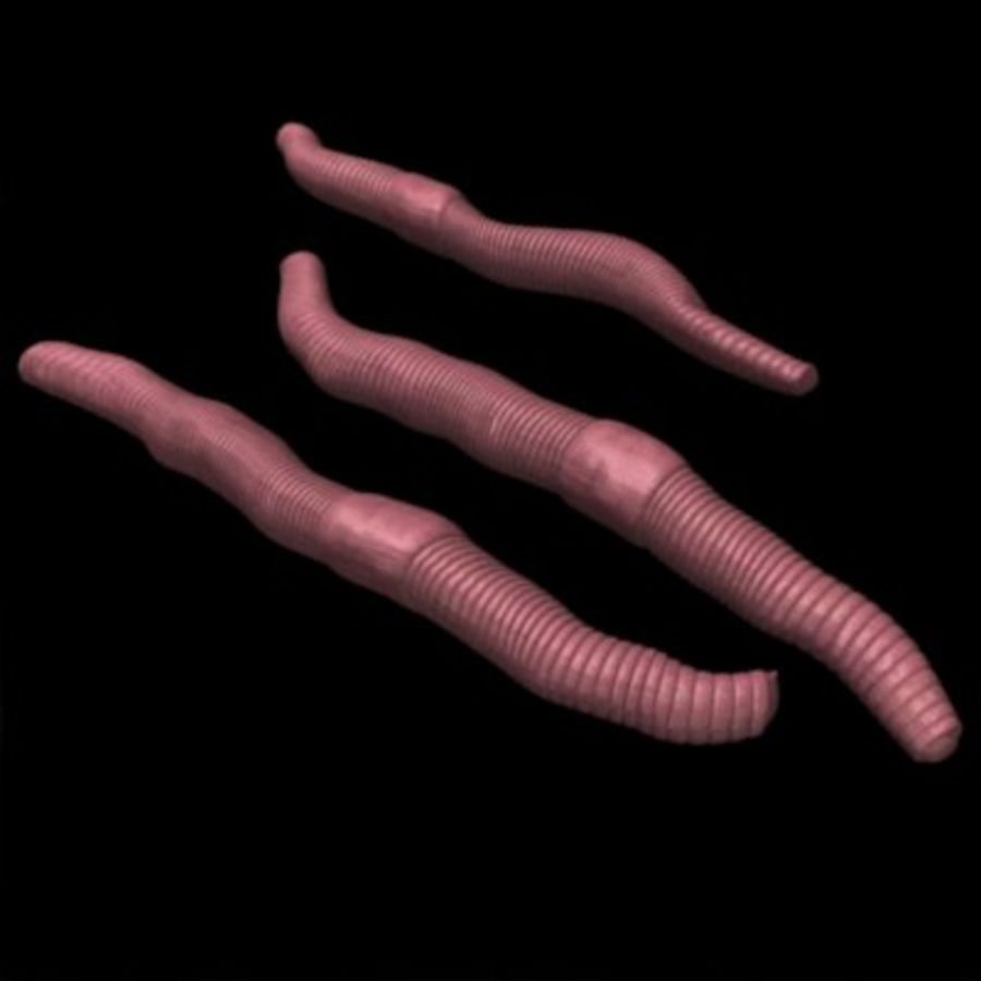 worms royalty-free 3d model - Preview no. 2