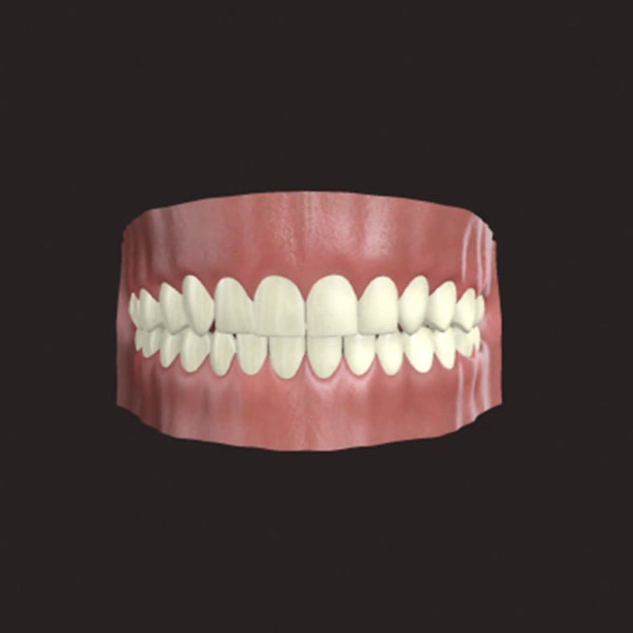 人类牙龈3d模型 royalty-free 3d model - Preview no. 3