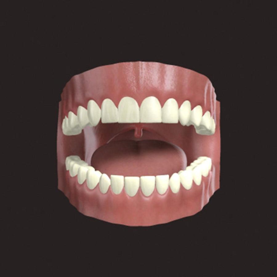 人类牙龈3d模型 royalty-free 3d model - Preview no. 1
