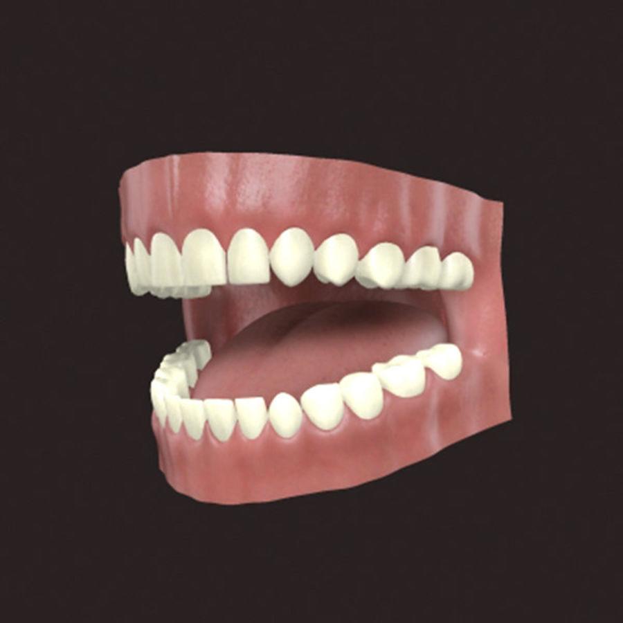 人类牙龈3d模型 royalty-free 3d model - Preview no. 2