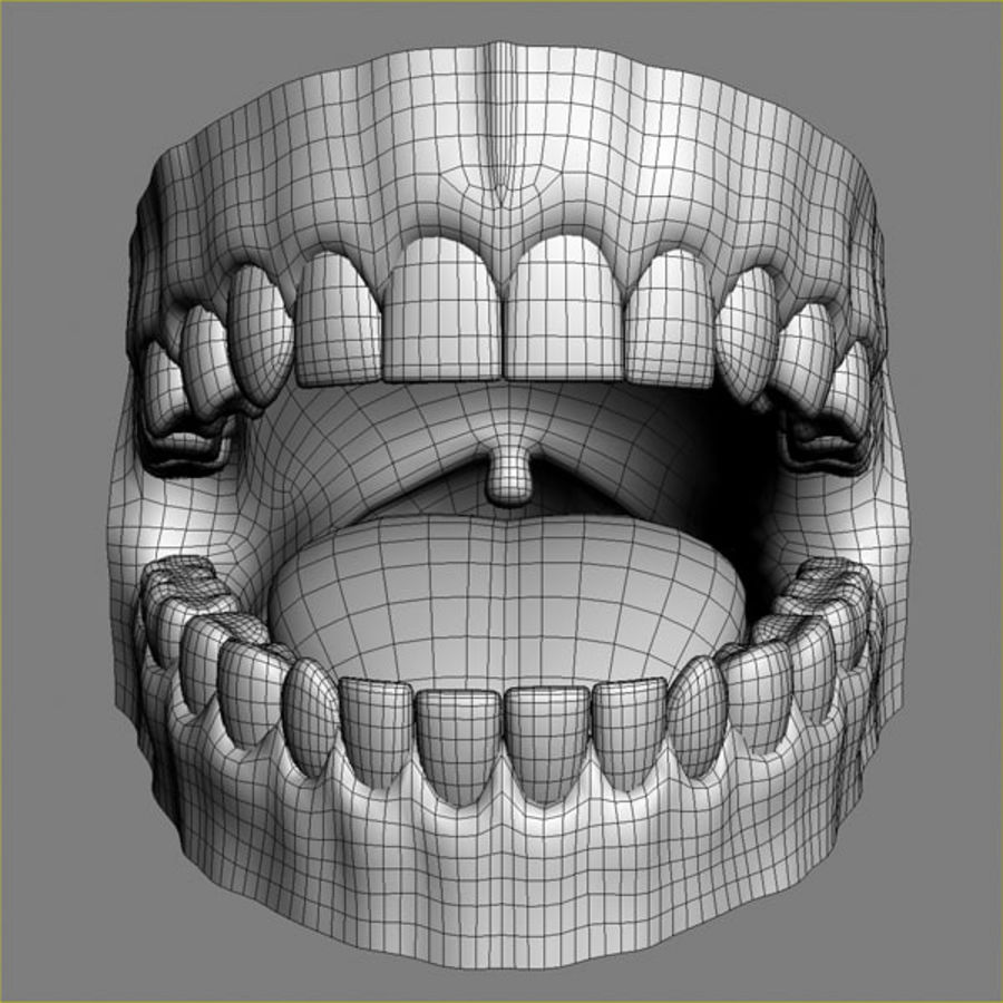 人类牙龈3d模型 royalty-free 3d model - Preview no. 6