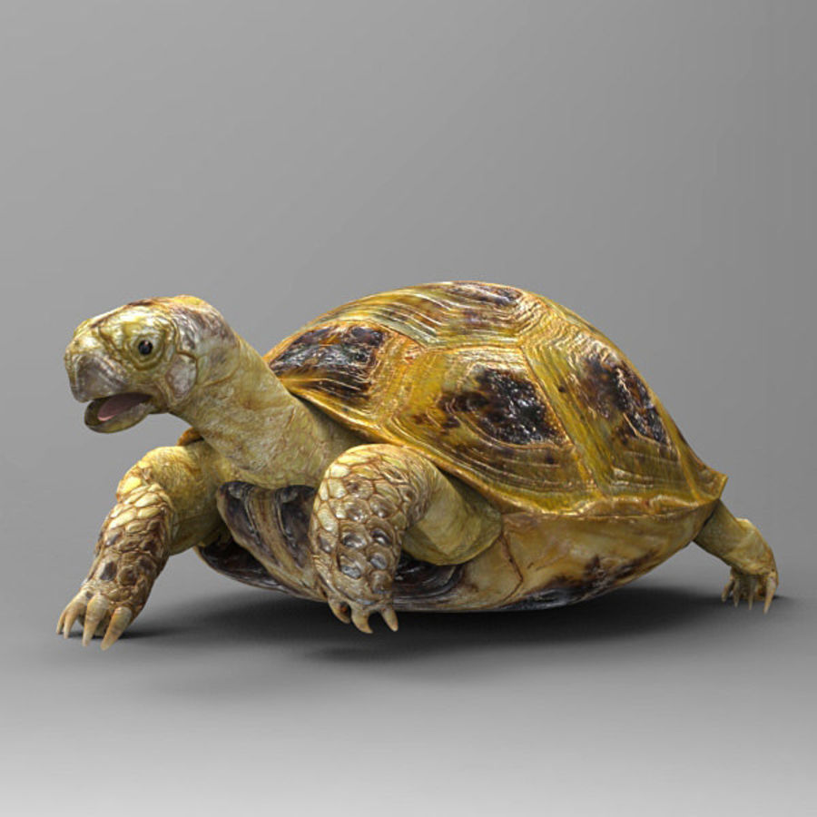Turtle_for_poser royalty-free modelo 3d - Preview no. 2