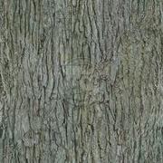 Big textured tree 3d model