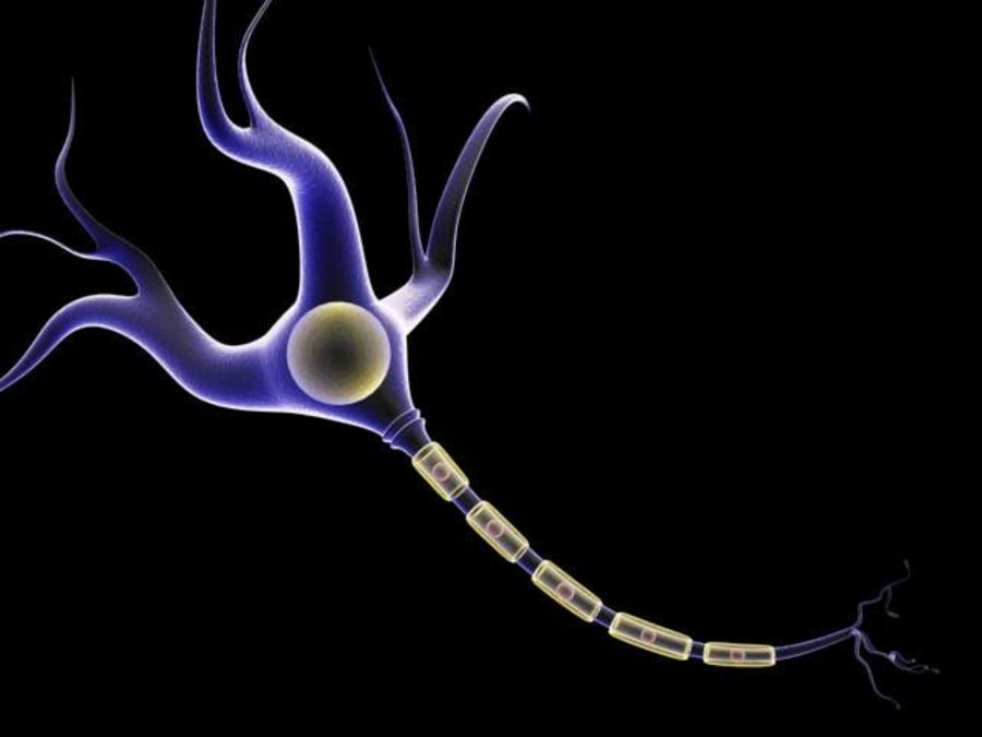 brain cell royalty-free 3d model - Preview no. 4