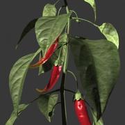 chilli.zip 3d model