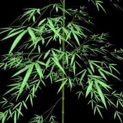 outdoor bamboo 3d model